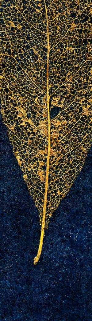 leaf005-Edit.jpg