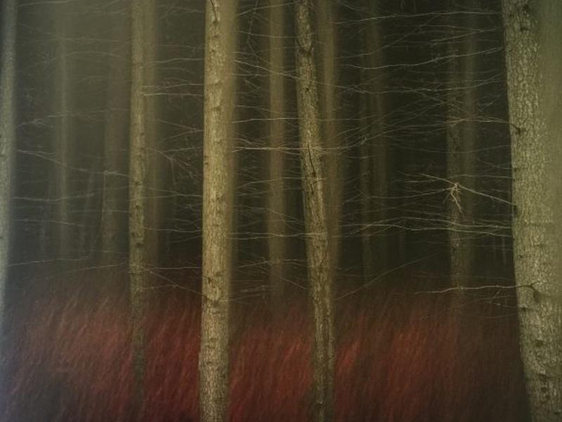 Fragile by Valda Bailey